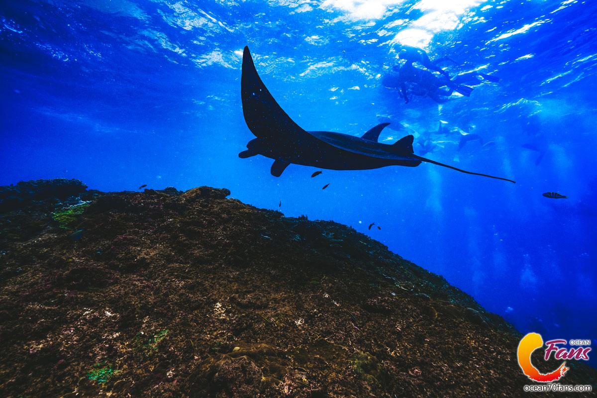 【自潛旅行】印尼·峇里島|自由潛水員與Manta共遊五大注意事項